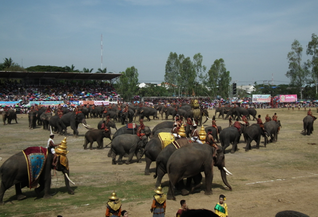 Elephants at Surin